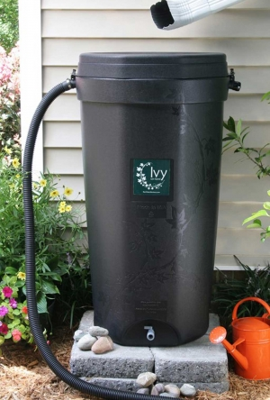 Ivy rain barrel features: