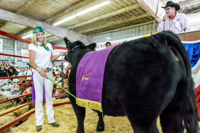 Erin Berrington, 13, Piru 4-H, raised Dallas, a 1,278 pound market steer that won the coveted Grand Champion Steer. At auction, Dallas sold for $6.50 a pound.