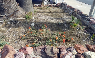 "The ""before"" picture of the rock planter at the corner of 126 & Central."
