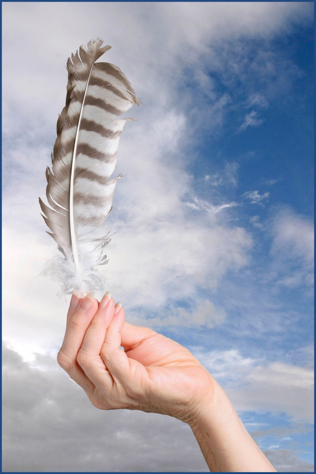 """Hawk Feather"" by Photographer Roger Conrad"