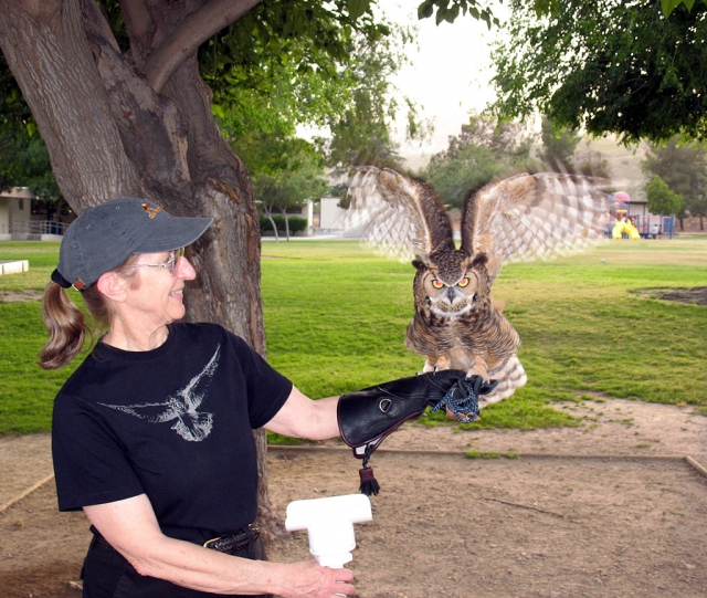 A volunteer from the Ojai Raptor Center holds a barred owl.