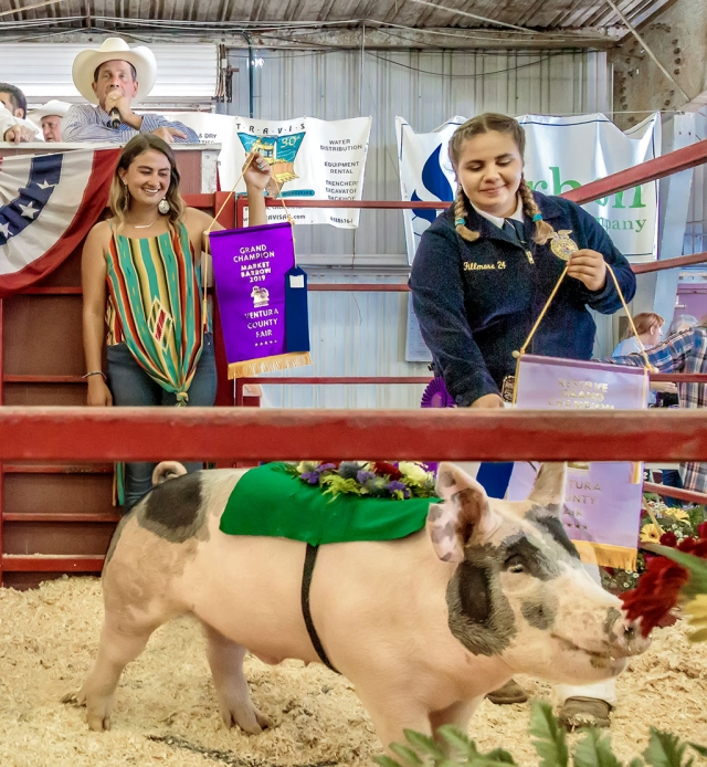 Pictured is Jordyn Blankenship who graced the auction ring with her Reserve Grand Champion/FFA Champion FFA market swine named Ruger. High bidder for Ruger paid $9.00 a pound.