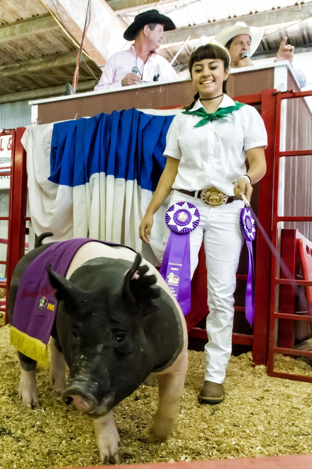 Jazmin Olvera, 17, Sespe 4-H, raised Romona, a 264 pound pig that was awarded the coveted Grand Champion Market Swine/4-H Champion.