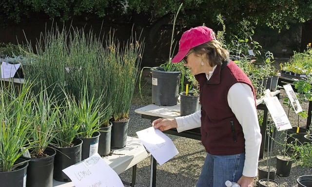 The Ojai Valley Museum is hosting its annual Fall Native Plant Sale on Saturday, October 2nd from 9 a.m. to 2 p.m. in the museum's back courtyard.