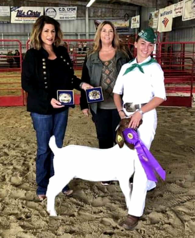 On Sunday, August 4th at the Annual Ventura County Fair, Sespe 4H kicked off the first week and had four kids place well in this year's Goat Breading and Pygmy Goat Show for Small Live Stock. Pictured right is Brooke Allen (far right) along with one of the fair judges and the breeder of her goat. Brooke was awarded Supreme Grand Champion Weather Dam Doe, Senior Showmanship. Pictured below are three of this year's winners in the Pygmy Goat show: Isabella Zavala, Supreme Grand Champion Unregistered Pygmy, 3rd place Junior Showmanship; Ethan Zavala, Supreme Grand Champion Registered Pygmy, 2nd place Junior Showmanship; and Sophia Ocegueda, Reserve Champion Unregistered Pygmy, 3rd place Showmanship. Photos courtesy Kerrie Allen and Patrick Zavala