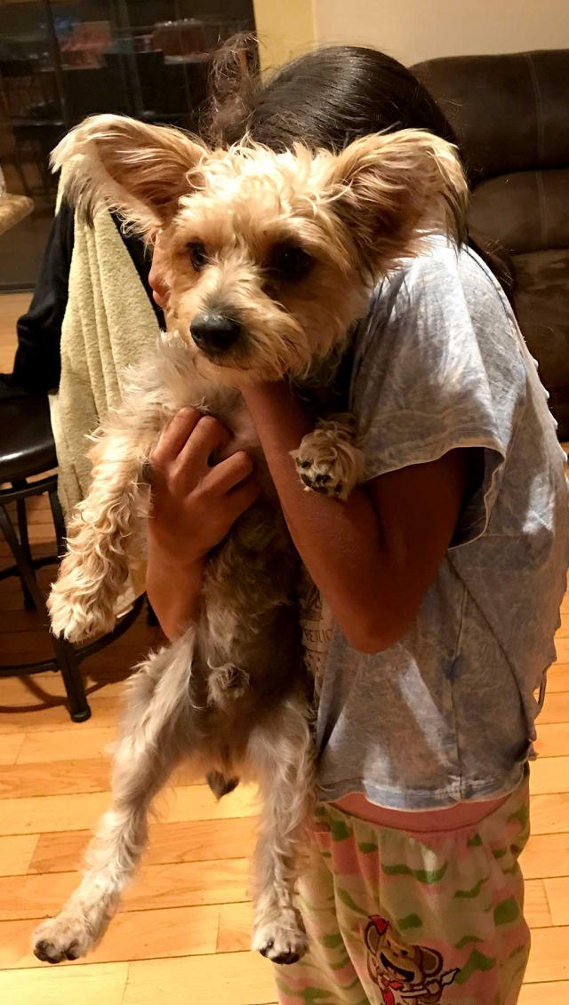 My name is Tiggy. I got lost right after I was bathed. I left before my owner put my collar on, so I don't have my dog identification on me. Please contact 805-830-3775 or 805-223-1578. $$$ REWARD IF FOUND.