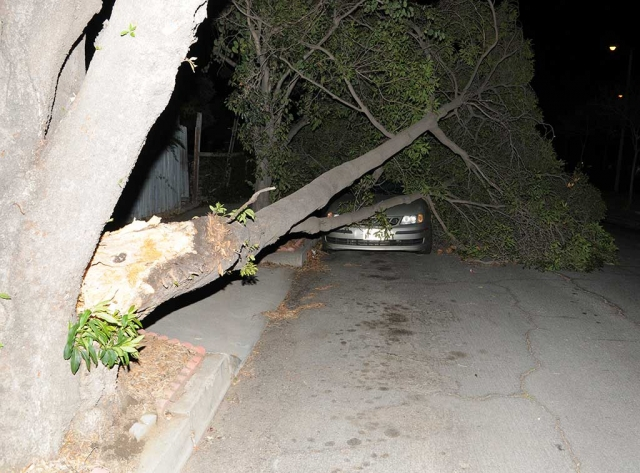 A large tree on Orange Grove Avenue, north of Ventura Street, split a limb Monday night during high winds and fell on a local resident's car.