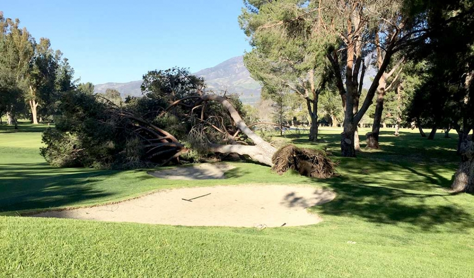 Fillmore's last storm knocked down a tree at Elkins Golf Course. Fillmore is expected to get more rain starting Thursday February 16th, so be sure to have your umbrellas ready.