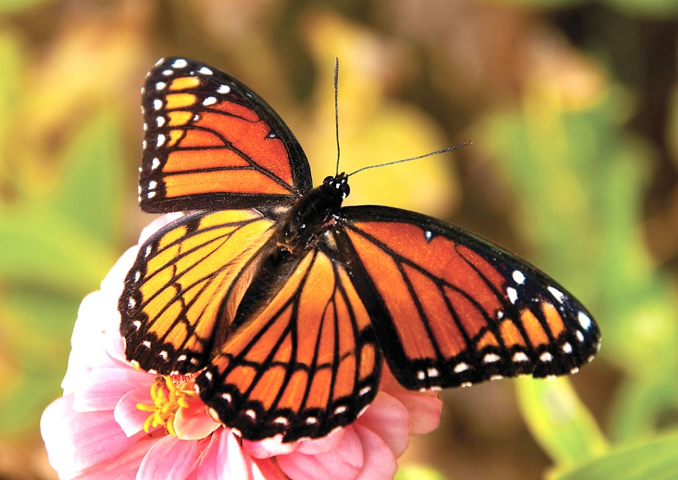Garden Designer Shows How To Create Your Own Monarch