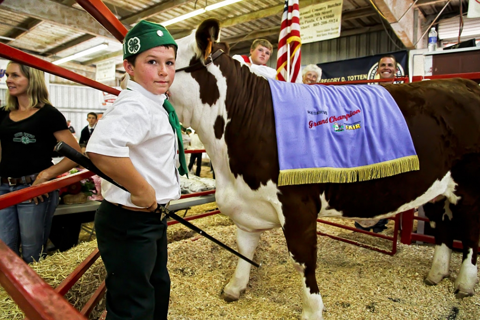 Phillip Theising, 11, Bardsdale 4-H, raised a replacement heifer and was awarded 4-H Champion/Reserve Champion. Phillip's champion replacement heifer, Penelope, fetched $10,000 at auction.