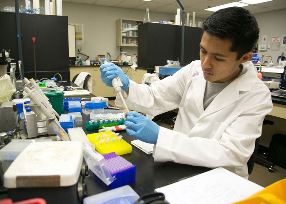 Gold award winner Salvador I. Brito conducting gene research . Photo credit: Megan Stone/California Lutheran University