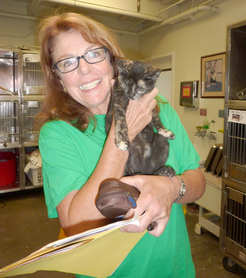 Nancy Vaniotis, VCAS Volunteer and former County of Ventura employee, shows off a kitten available for adoption at the Camarillo animal shelter.