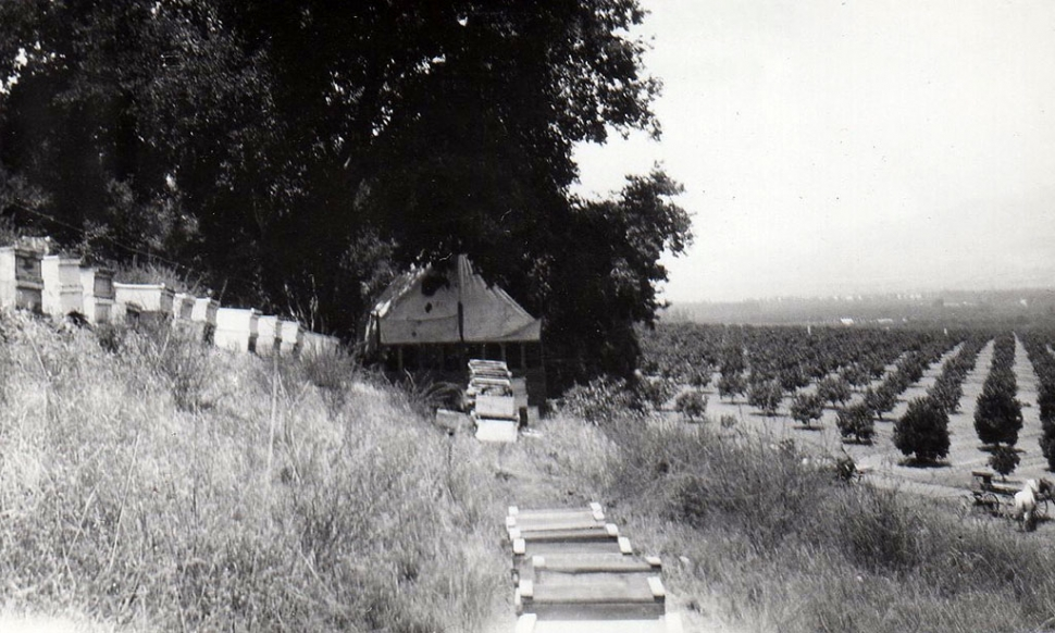 Beehives in Bardsdale.
