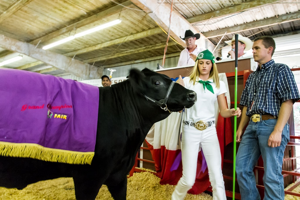 County fair jr livestock auction winners the fillmore gazette market steer named dipper that weighed in at 1356 pounds moreover dipper was awarded the title overall reserve champion steer in the auction ring thecheapjerseys