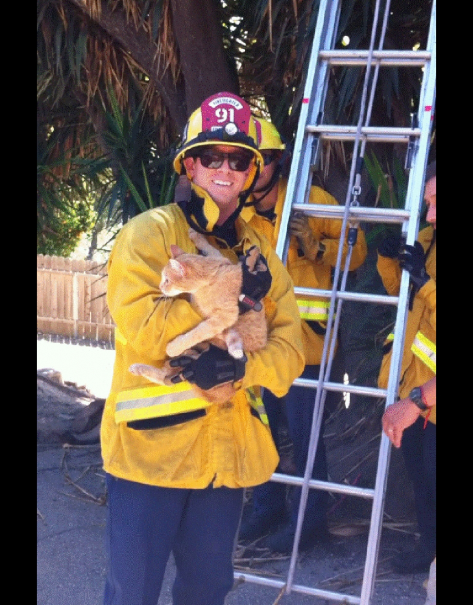 Cat rescued by Fire Department | The Fillmore Gazette