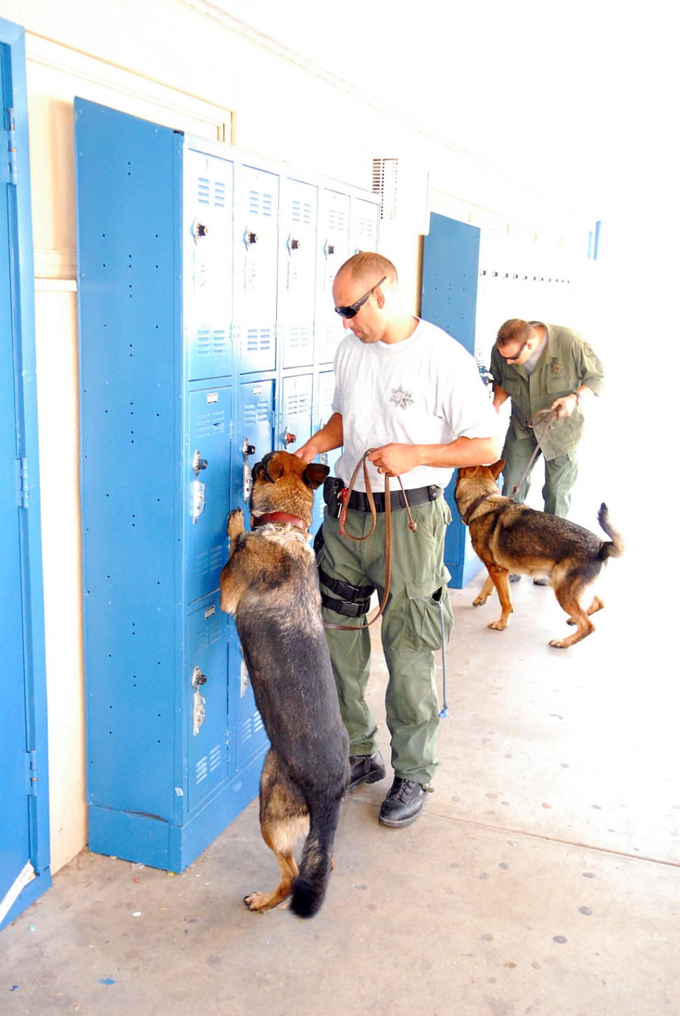 Fillmore High School received a surprise visit from the Ventura County Sheriff's Department's drug enforcement agency last Thursday. Numerous K-9 units from around the county participated in one of their regularly scheduled drug detection training events. The dogs are highly trained in discovering narcotics.