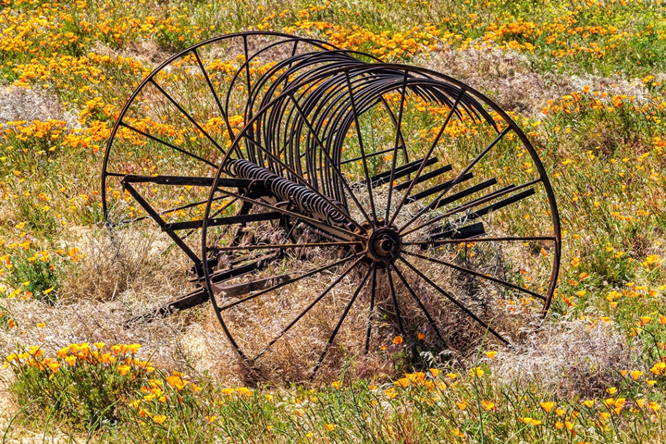 "Photo of the Week ""a hayrake in a field of poppies in the Antelope Valley"" by Bob Crum. Photo data: Canon 7D camera, Canon EF-S 55-250mm lens @163mm, Exposure; ISO 200, aperture f/22, shutter speed 1/30 second."