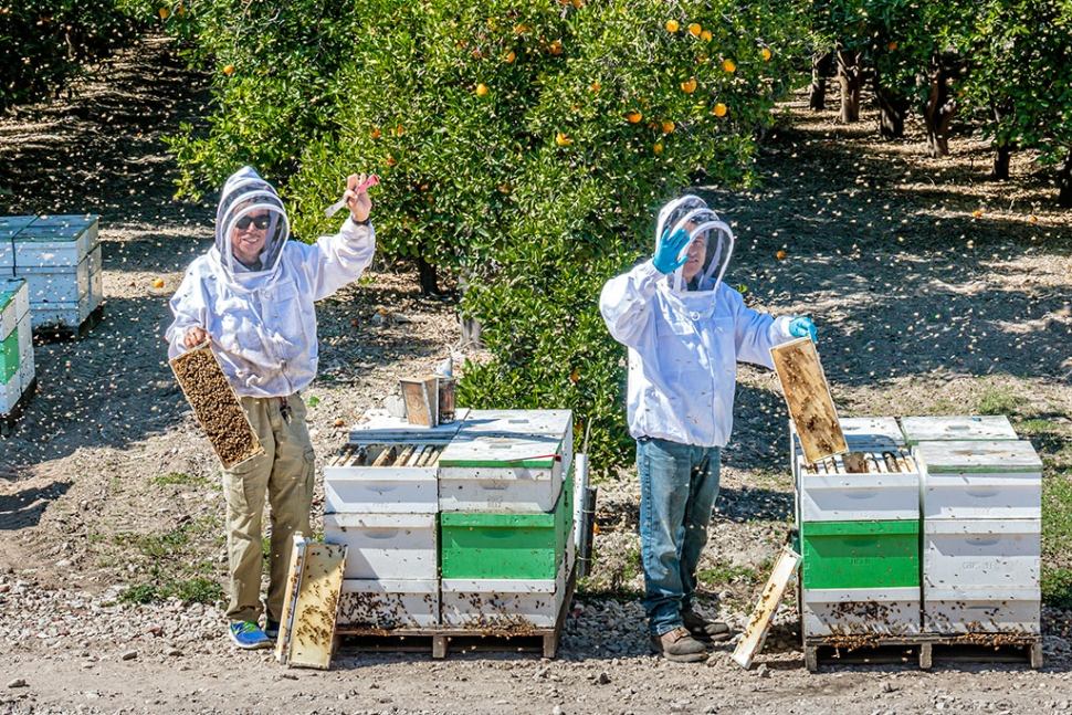 "Photo of the Week: ""Beekeepers working at the hives. Little brown spots flying around are, ahem, bees! And lots of bees around the hives in the orange grove"" by Bob Crum. Photo data: Canon 7DMKII camera, manual mode, Tamron 16-300mm lens @50mm. Exposure; ISO 320, aperture f/10, shutter speed 1/500s. More Honey Festival Photos to come next week."