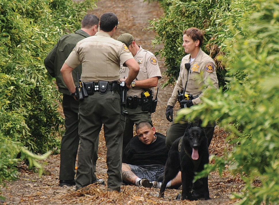 Ventura County Sheriff's Deputy Delpit with three other unidentified deputies arrest one of three alleged car thieves following a comprehensive pursuit. Sheriff's Office Air Unit and two K9 Units participated in the apprehension of the three suspects and the recovery of two stolen vehicles.