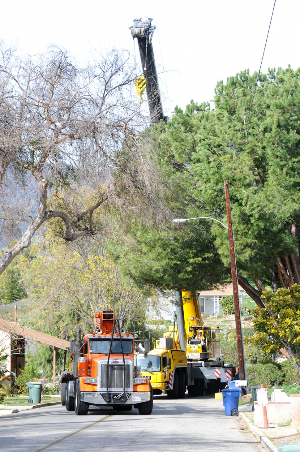 A large tree needed to be removed from Foothill Drive on Friday, January 24th. The street was closed to one lane while crews brought in a giant crane to safely remove the tree. The soil surrounding the root system was too soft, and the tree posed a danger to area homes and cars.